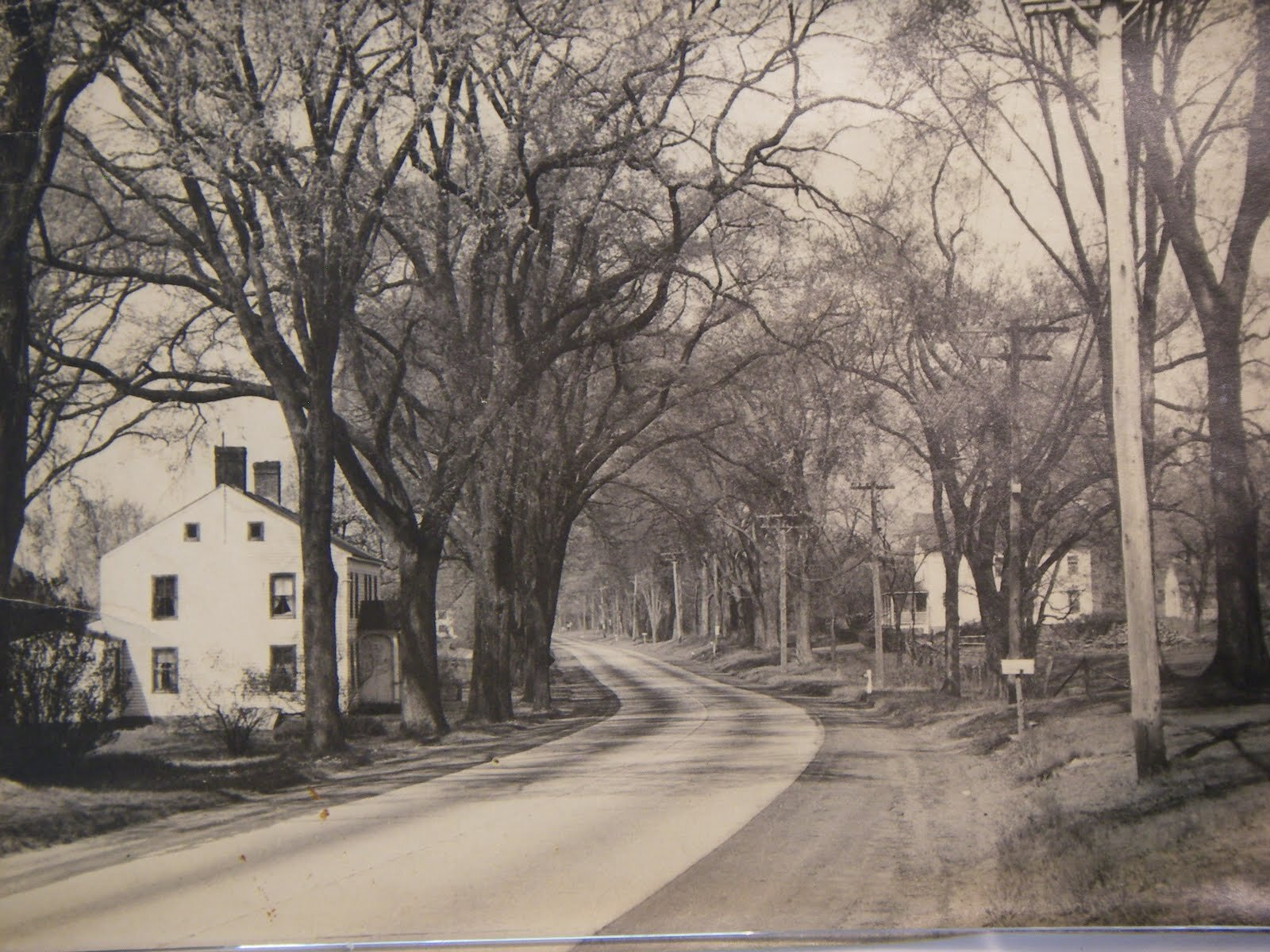 Madison House with Elm Trees