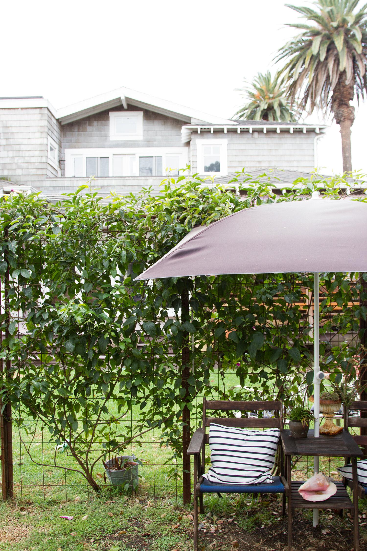 craftsman mini-me: venice, california   reading my tea leaves