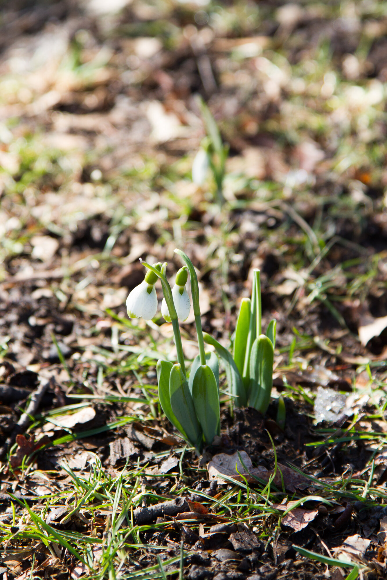 how to know it's march | reading my tea leaves